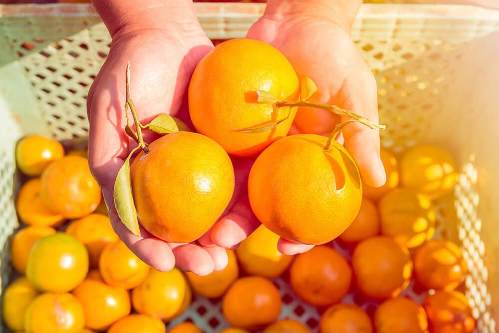 収穫した果物
